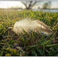 """FEATHERS: """"Divine Messages"""" to and from life's margins"""
