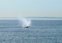 Whales at a Saltwater Margin