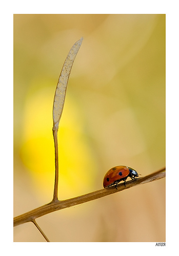 lady bug photo